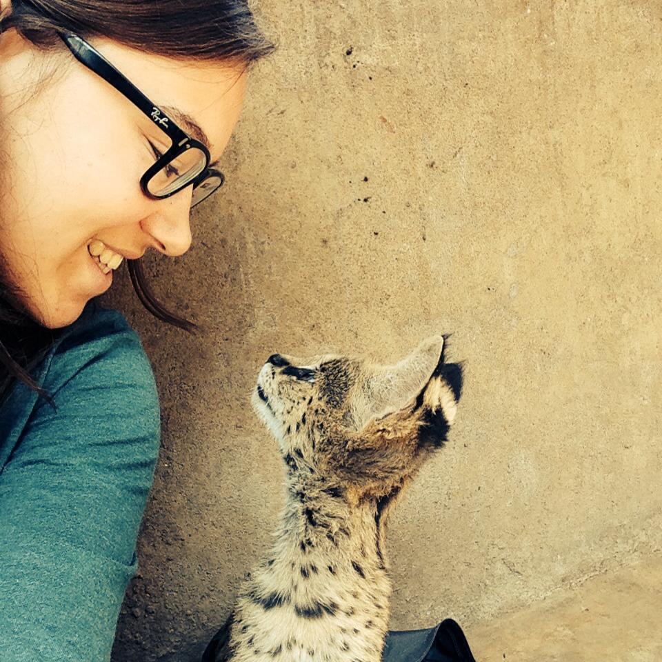 Serval kitten at Lilongwe