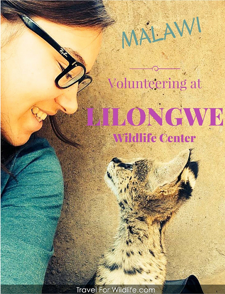 Volunteering in Malawi with wildlife
