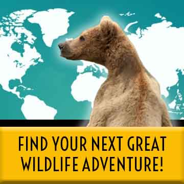 Search Wildlife Destinations