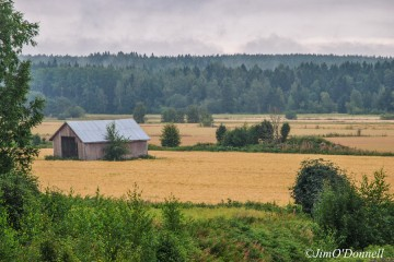 An old barn sits on a crop field by the forest