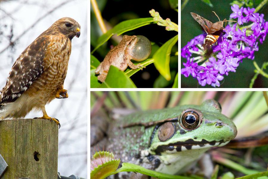 A hawk, a frog, a moth and another frog