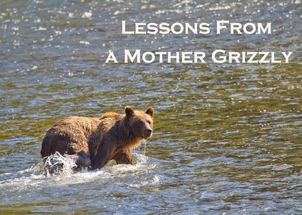 Grizzly bear in a river