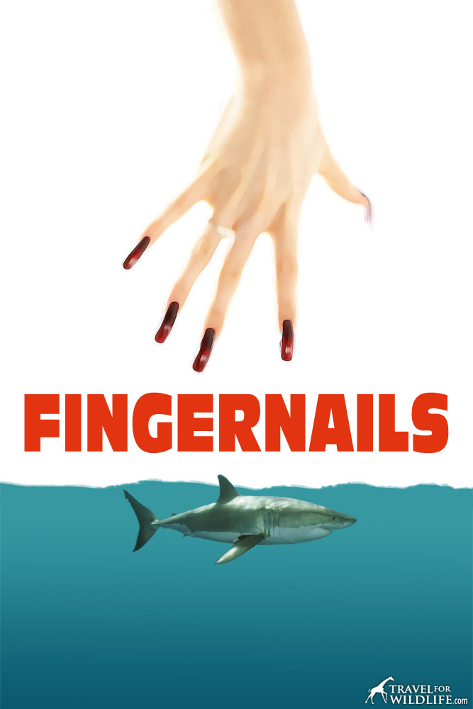Movie poster from the 1975 horror film FINGERNAILS, which still has sharks on edge near land to this day.