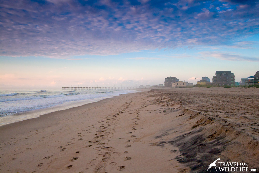 This peaceful beach along the coast of North Carolina has been the scene of dozens of gruesome attacks against sharks by humans this summer.