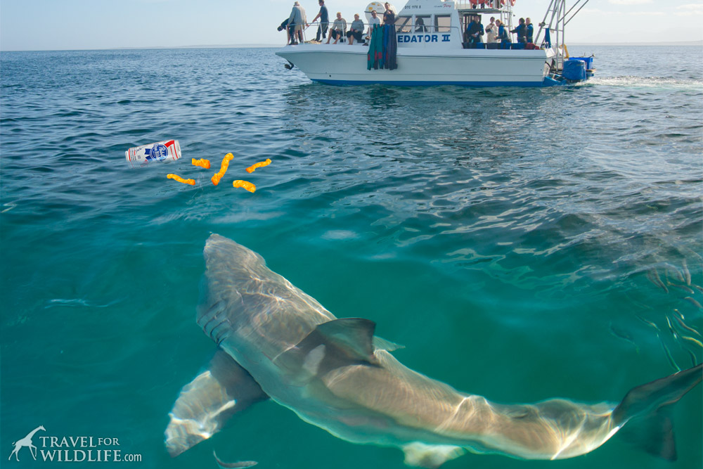 Shark Attacks What You Need To Know Travel For Wildlife