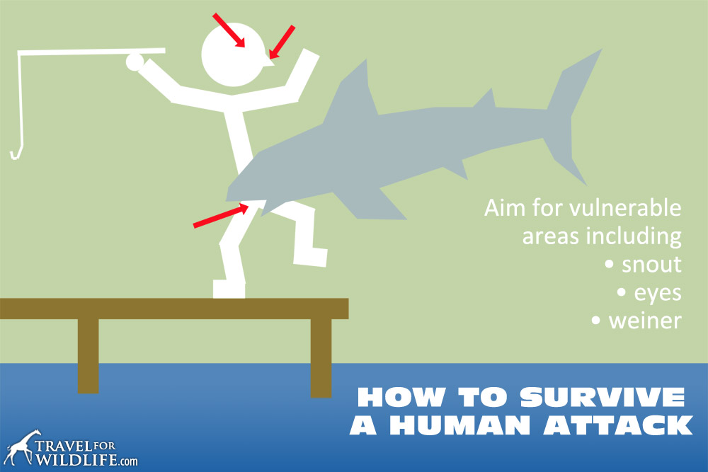 How To Survive a Human Attack. Diagram showing the vulnerable areas on a human.