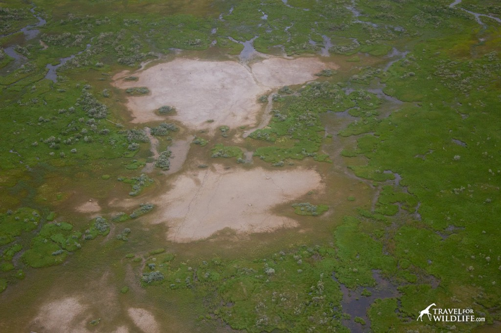 Bear trails in Wapusk NP
