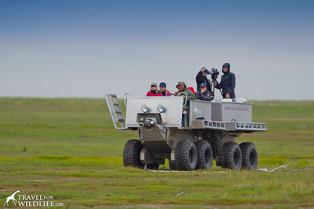 A rhino, the open-top vehicle