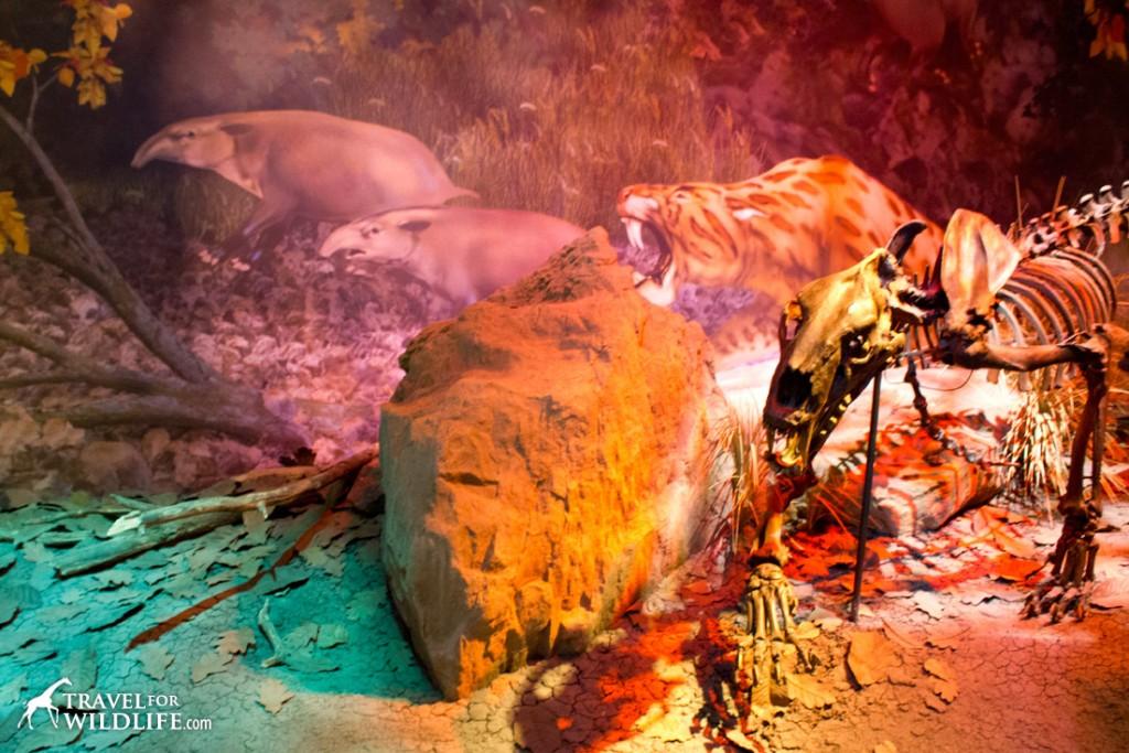 Saber-toothed cat hunting tapirs diorama