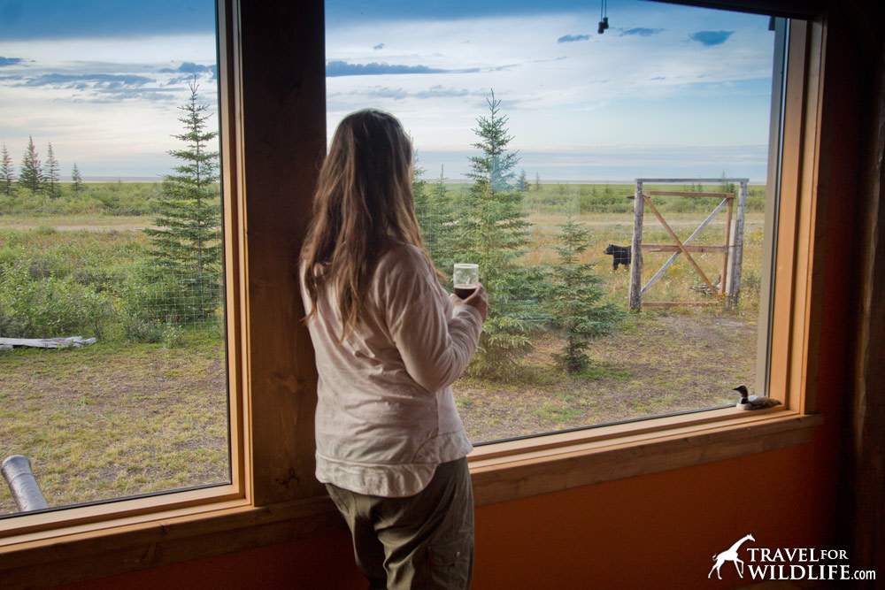 Watching bears from the dining room is a must during your polar bear tour