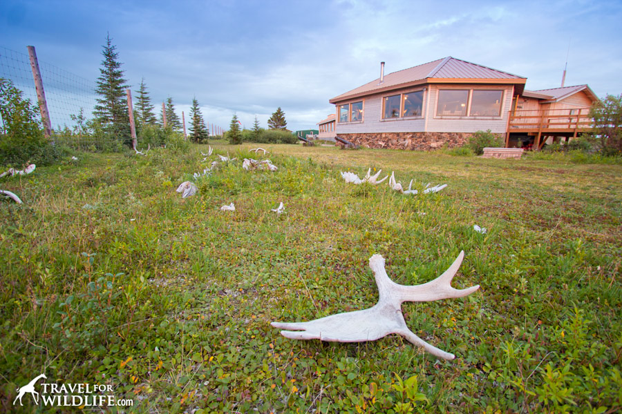 The Nanuk lodge grounds