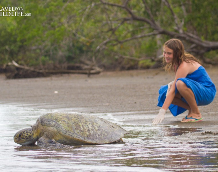releasing a green sea turtle