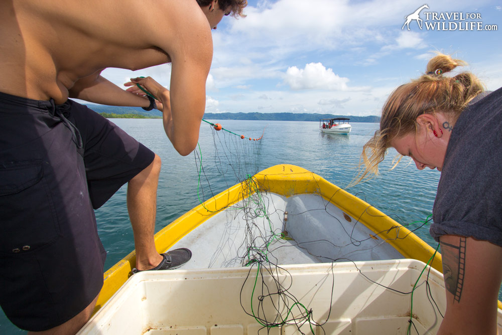 stretching sea turtle nets on Golfo Dulce