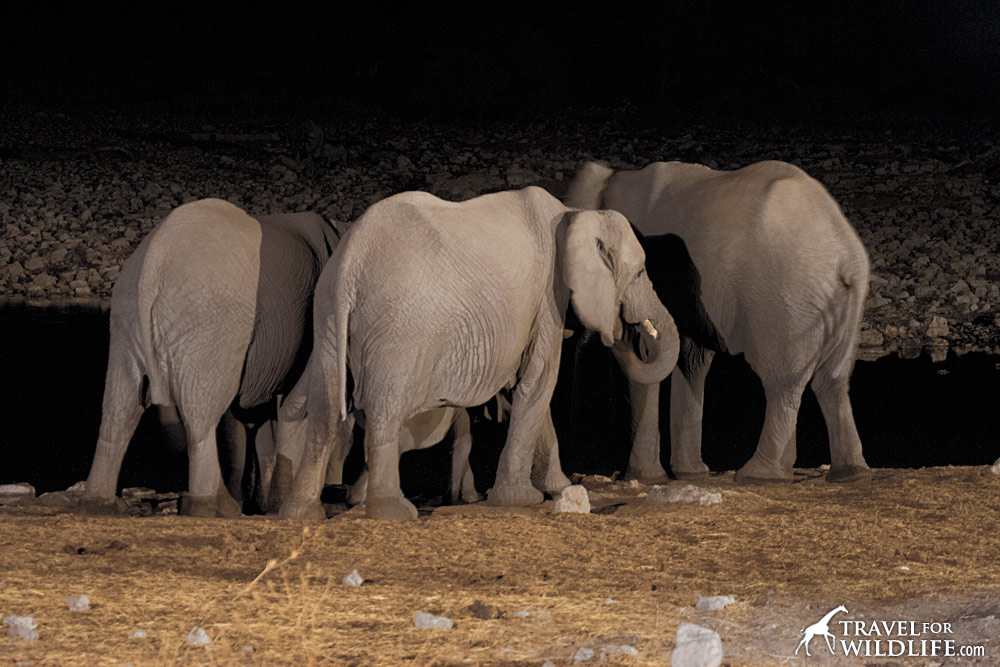 Group of elephants at a waterhole at night
