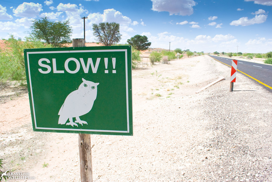 Owl traffic sign, Kgalagadi