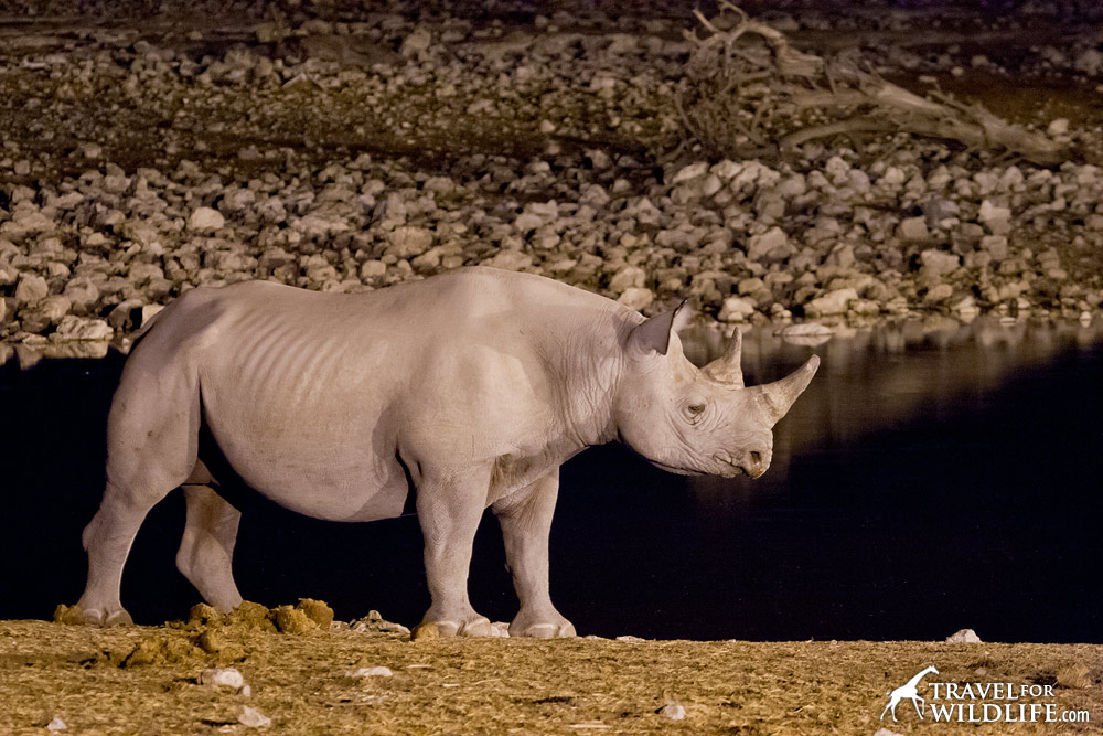 Black rhino at waterhole