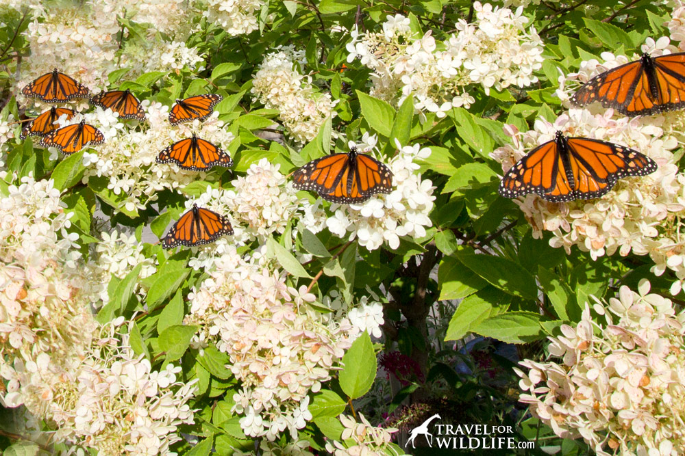 Make A Butterfly Garden And Create A Monarch Paradise