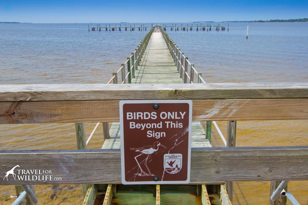 """""""Birds only beyond this sign"""" for birds roosting on old dock, Atsena Otie Key, Cedar Keys National WIldlife Refuge, Florida."""
