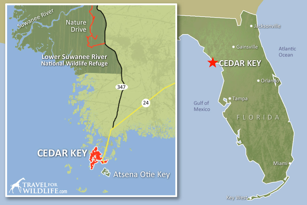 Map of where to kayak with dolphins and see wildlife around Cedar Key, Florida
