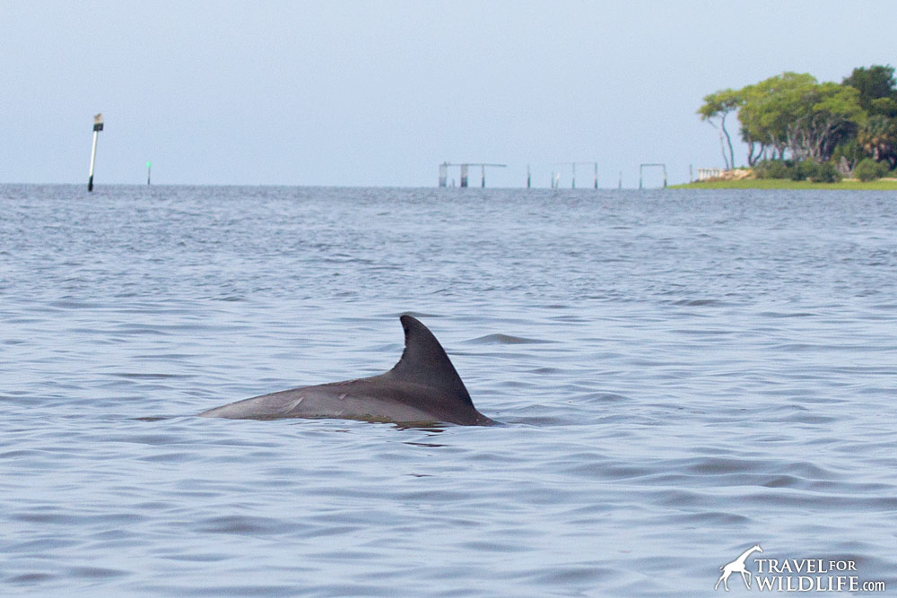 Kayaking with dolphins in Florida