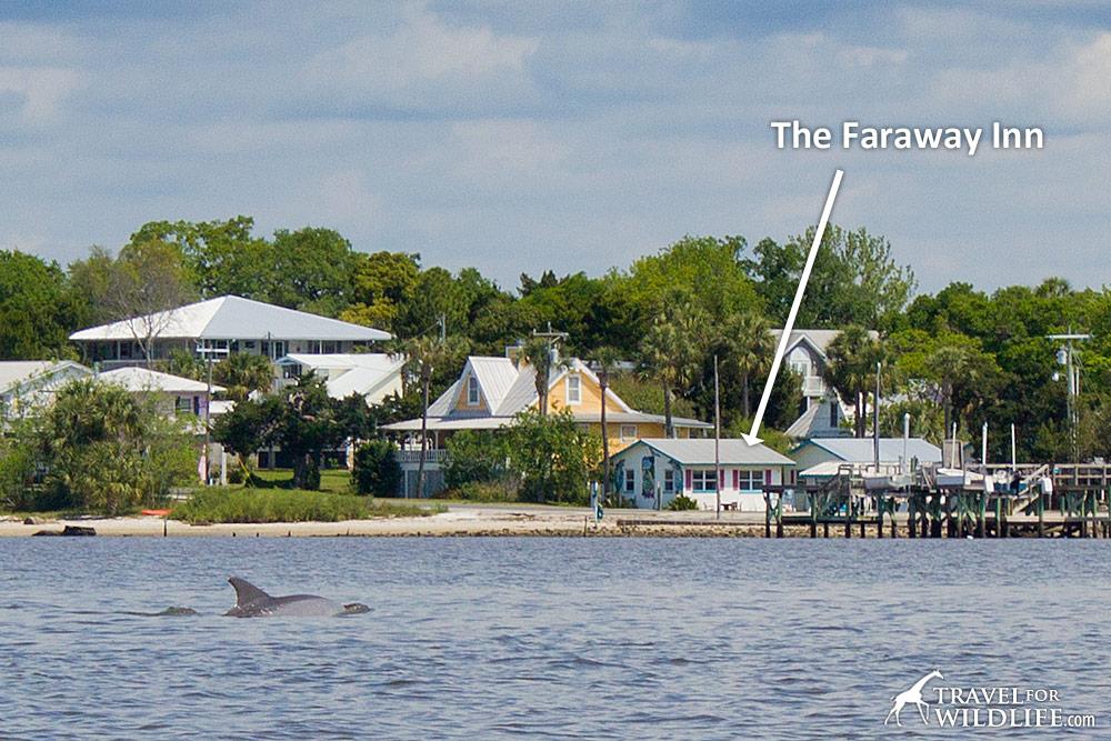 kayaking with dolphins at Faraway Inn, Cedar Key, FL