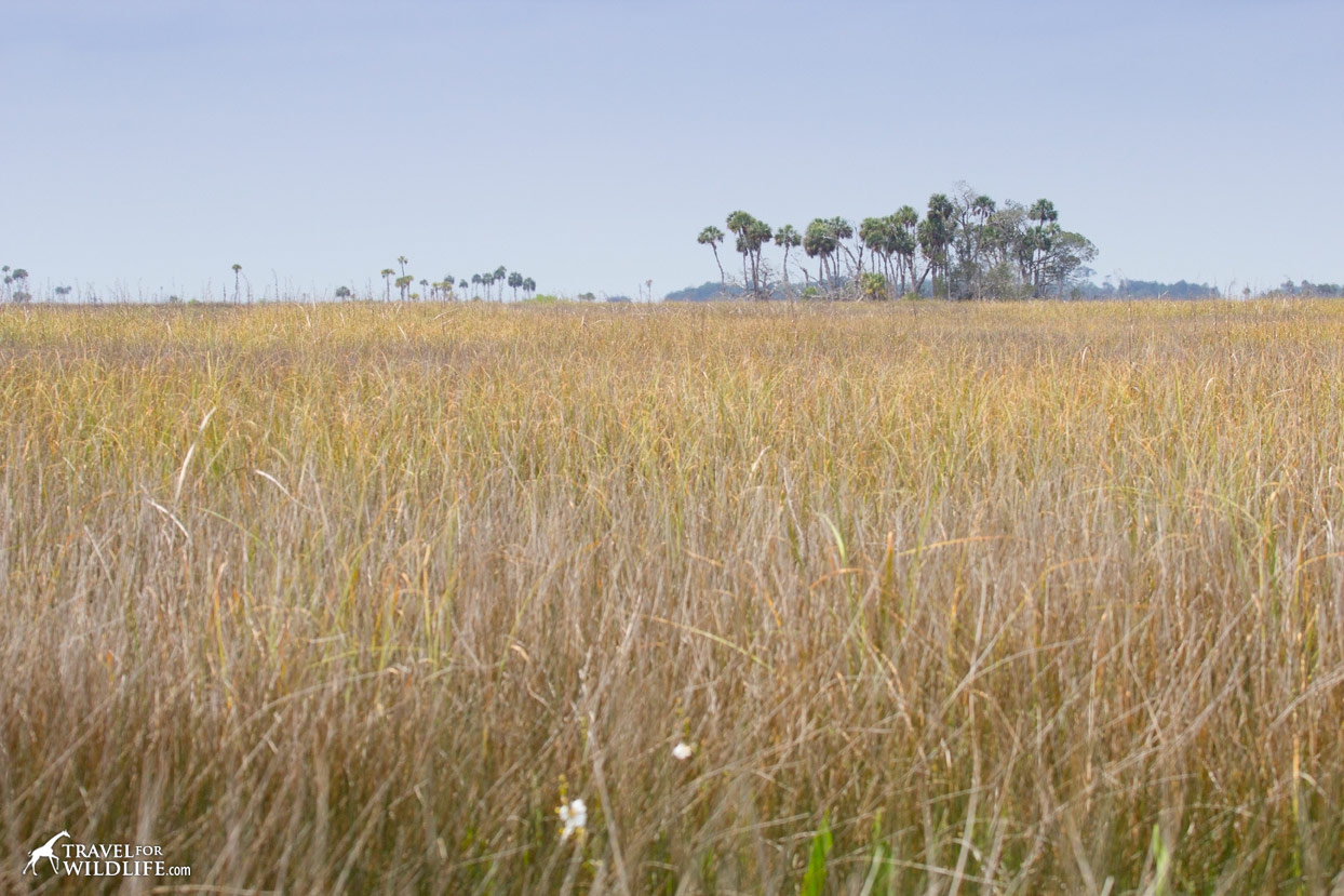 Grassland is one of the habitats at Lower Suwannee
