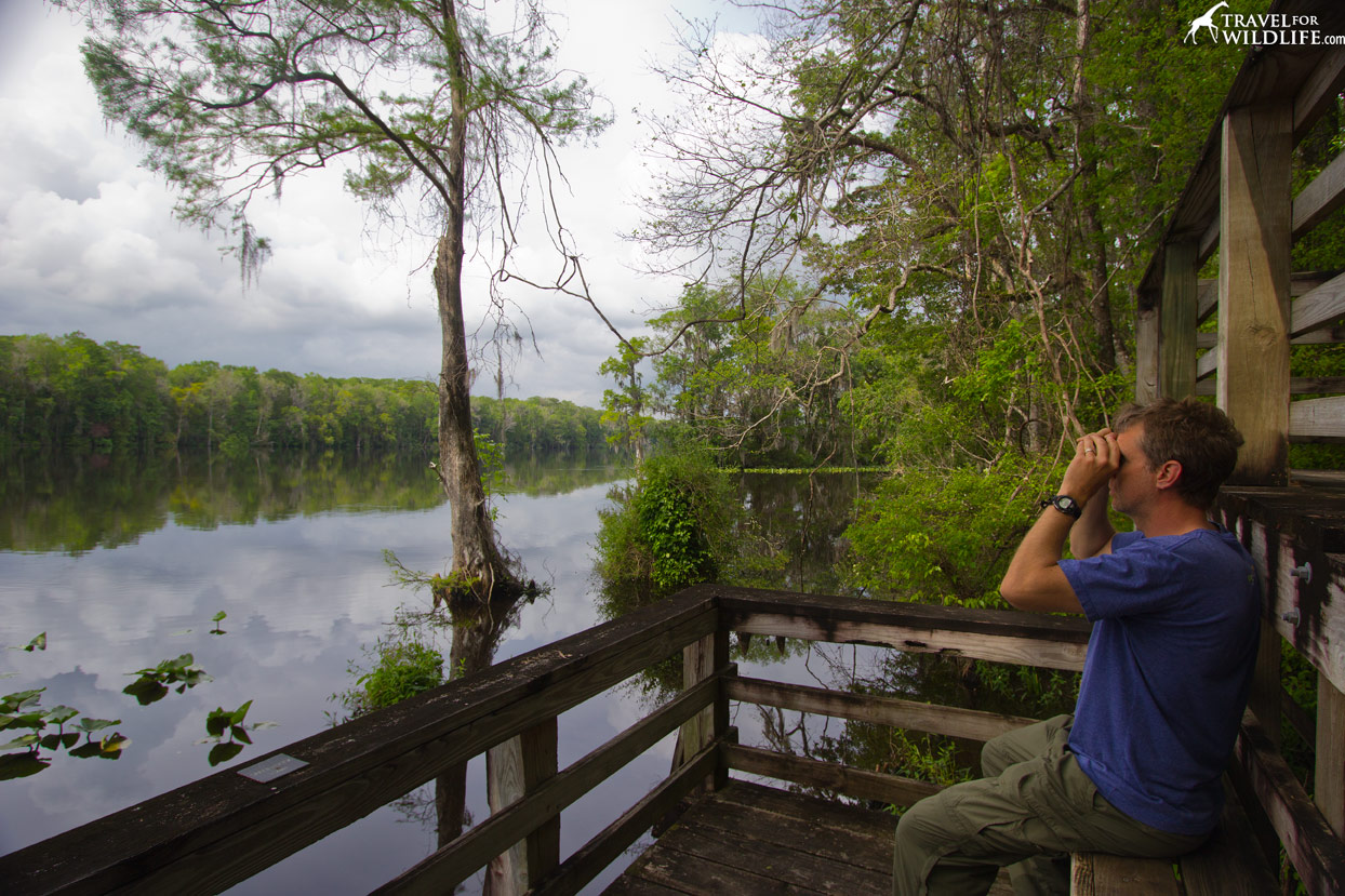 The viewing platform at the Suwannee River