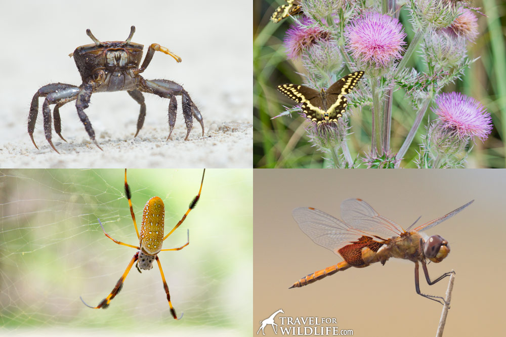crabs, insects and arachnids of Lower Suwannee National Wildlife Refuge, Florida