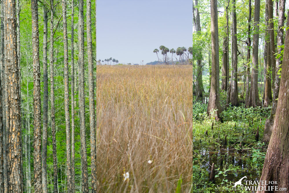 habitats of the Lower Suwanee River National Wildlife Refuge, Florida