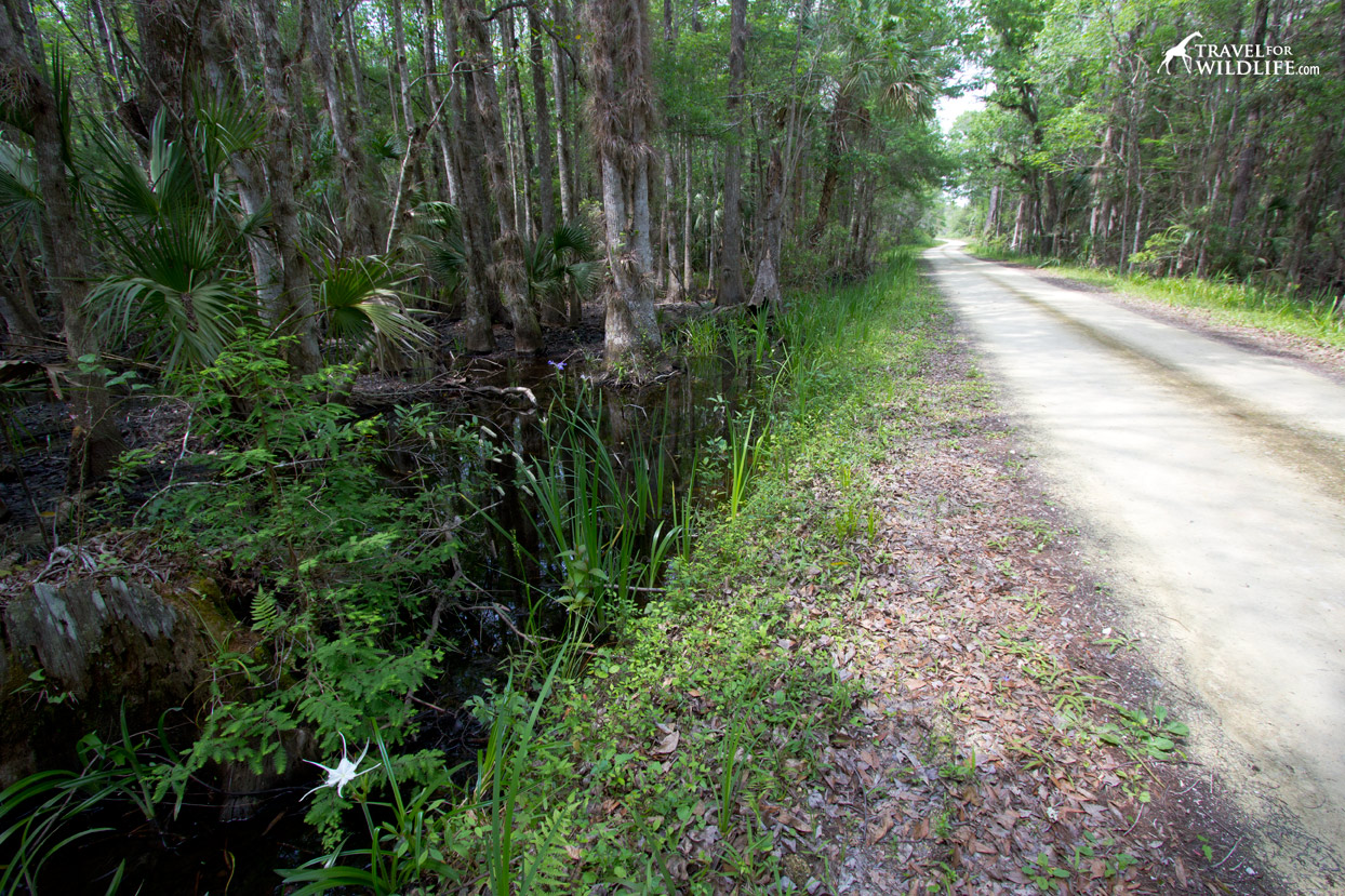 Road through swamps