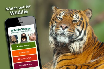 report tiger trafficking