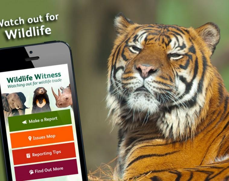 report tiger trafficking