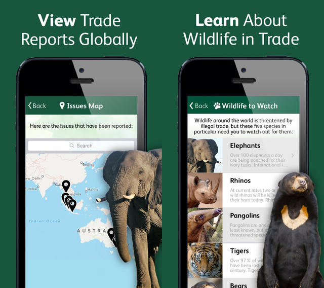 Learn what to look for when reporting illegal wildlife trade