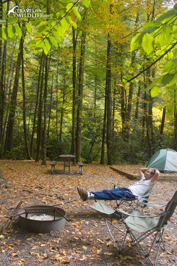 Pitch a tent in the Smokies