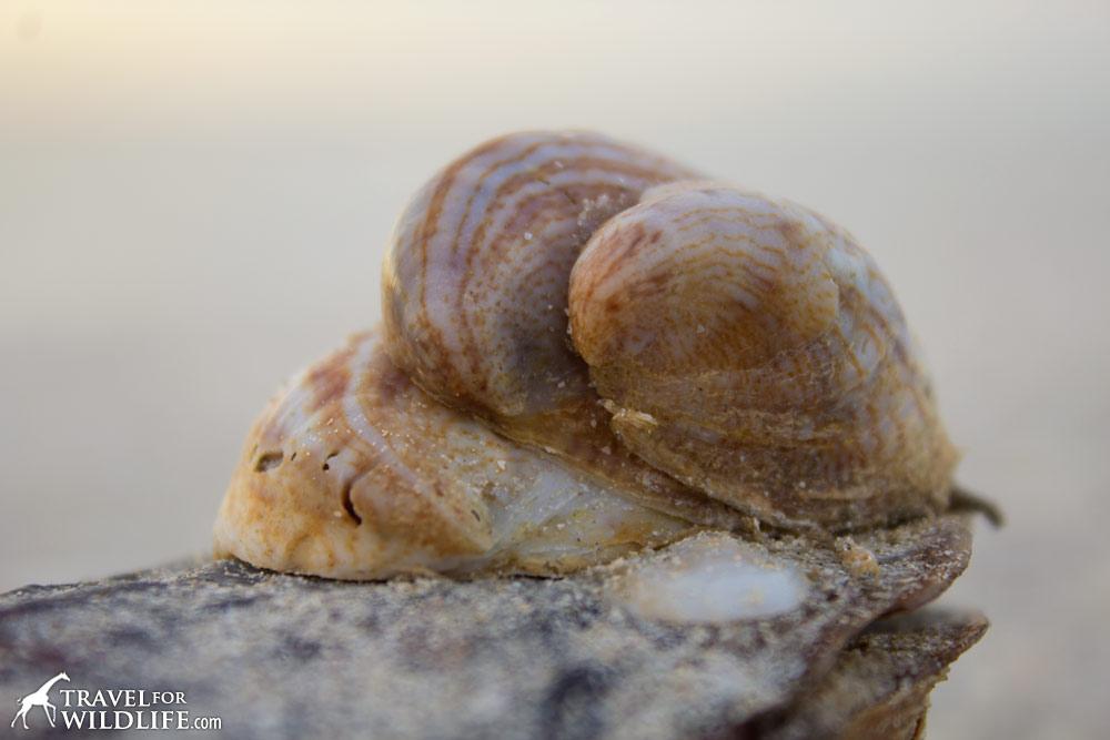 The Living Sea Shells A Photo Gallery Of Sanibel Island Seashore