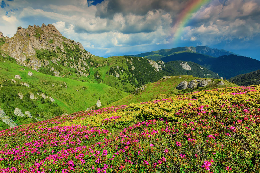Wild flowers in Transylvania, Romania