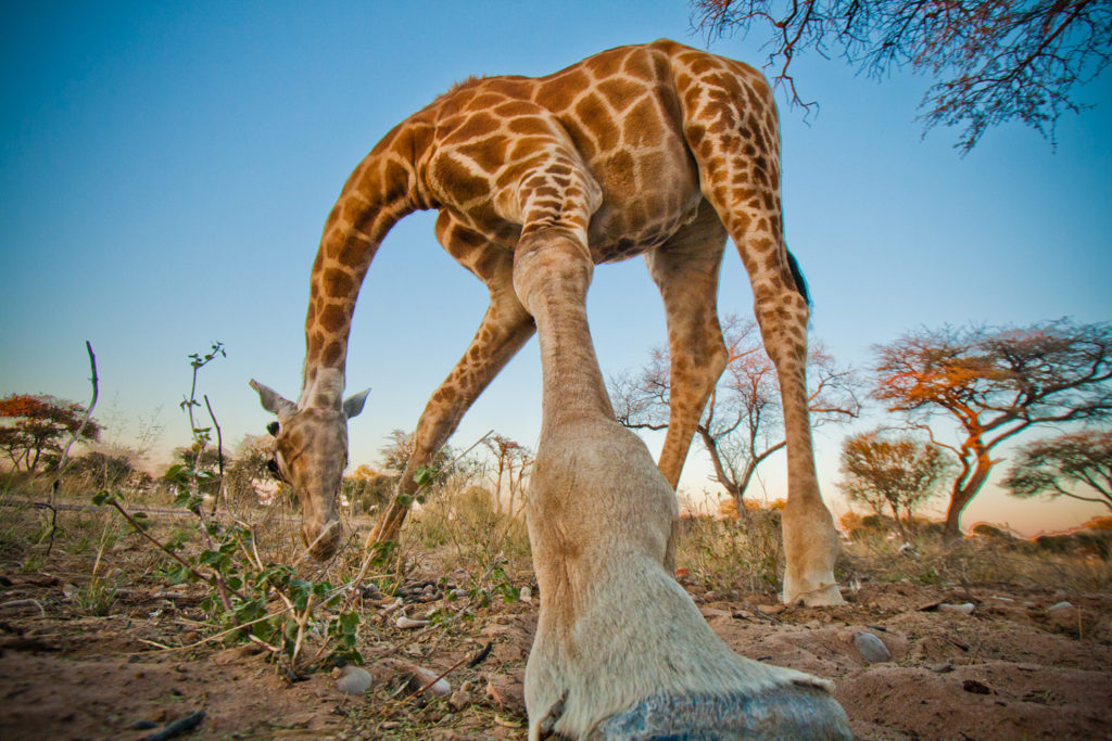 Kalahari Rest, Botswana. © Hal Brindley