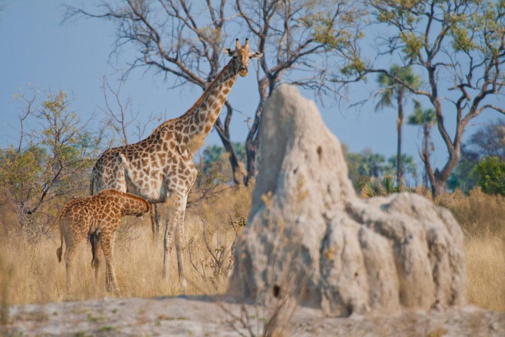 Okavango Delta, Botswana. © Hal Brindley