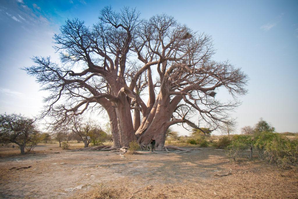 Makgadikgadi Pans, Botswana. © Hal Brindley