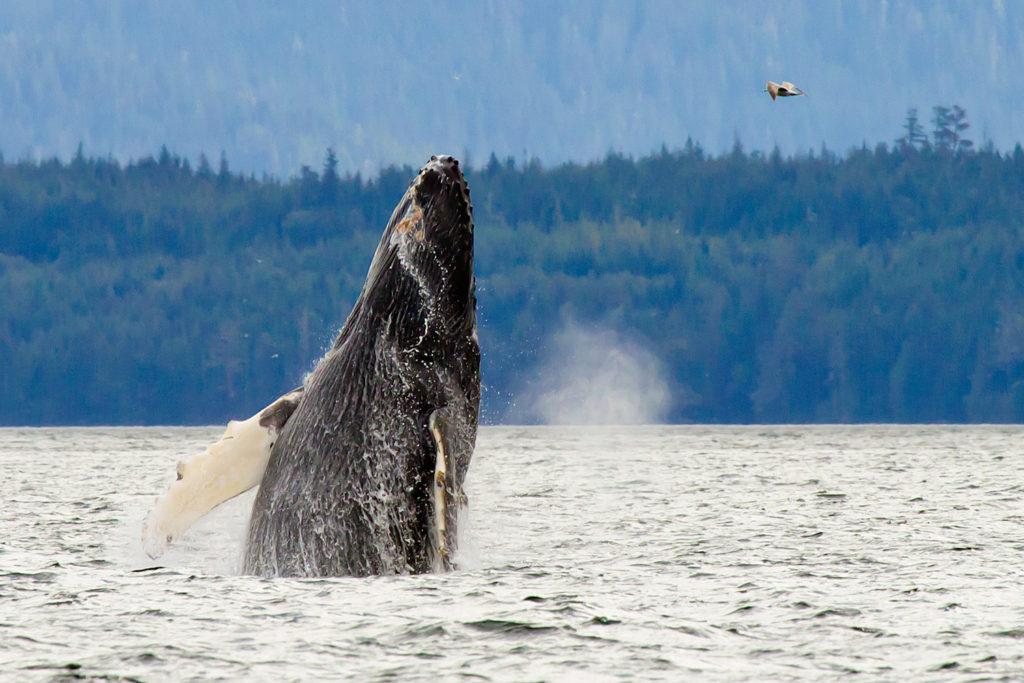 016-whale