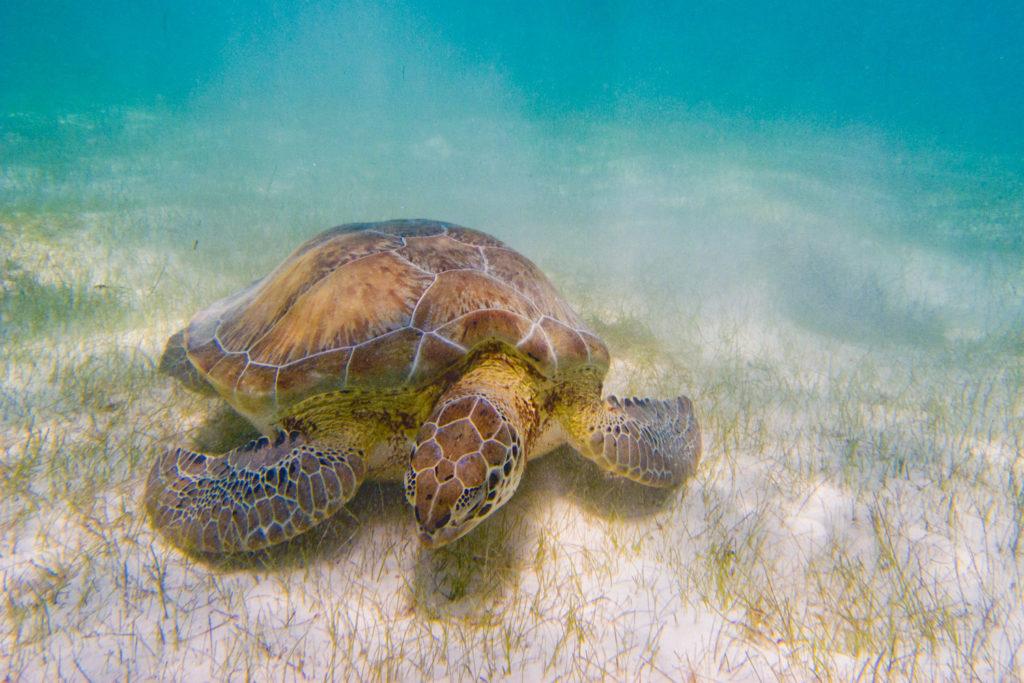 039-sea-turtle