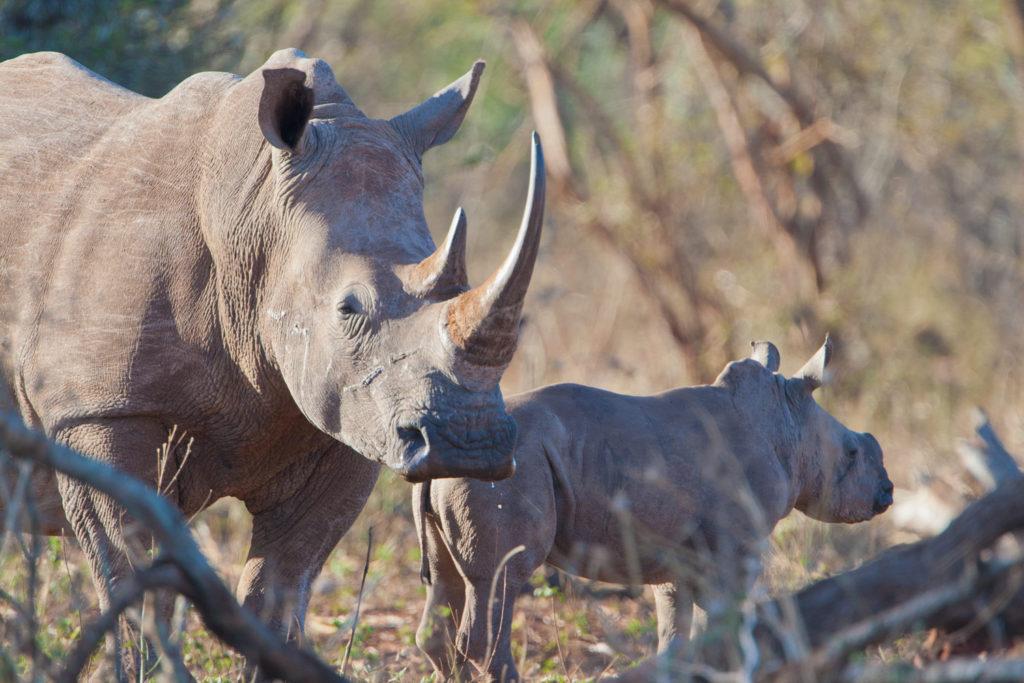 Hlambanyathi, KwaZulu Natal, South Africa. © Hal Brindley