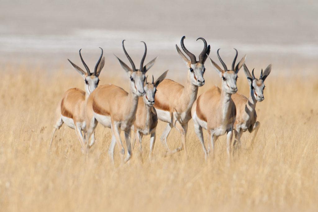 Etosha National Park, Namibia. © Hal Brindley