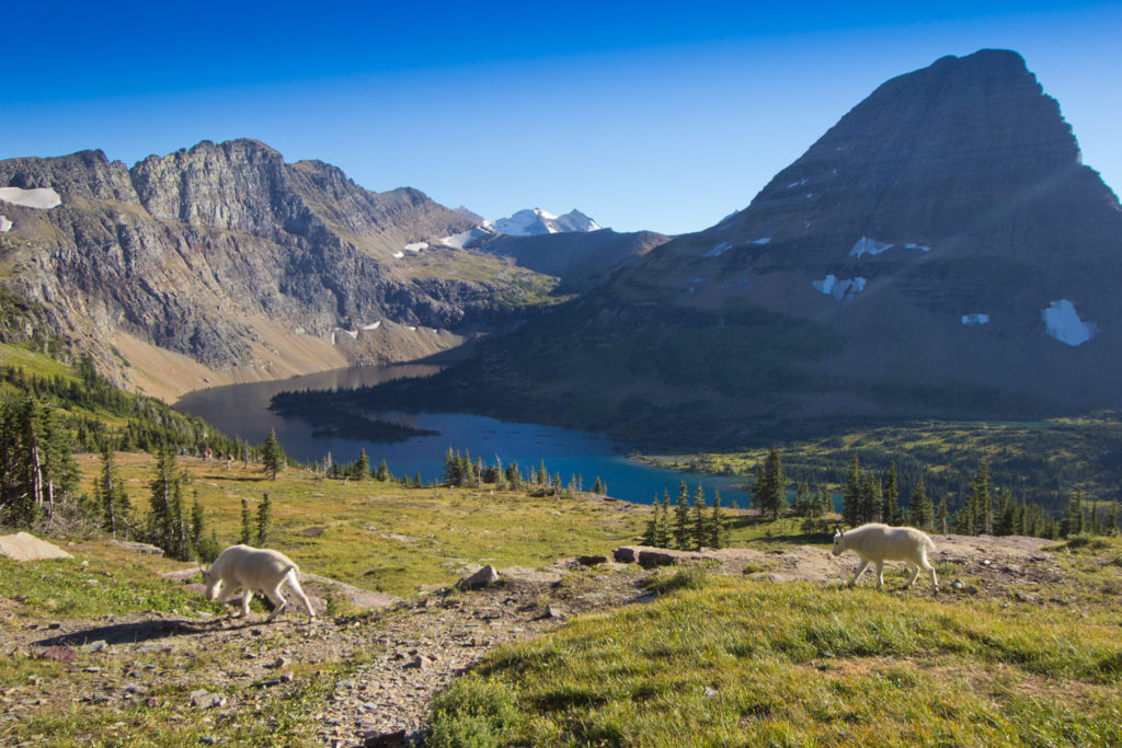 Hidden Lake Trail, Logan's Pass, Glacier National Park, MT