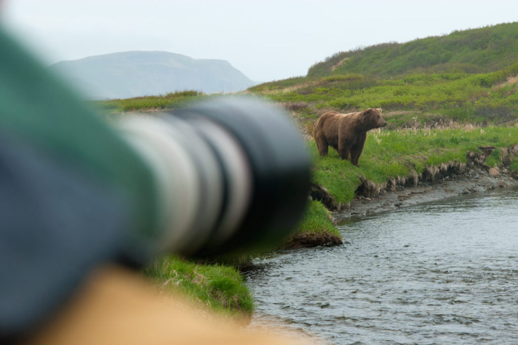 Photographing bears in Alaska
