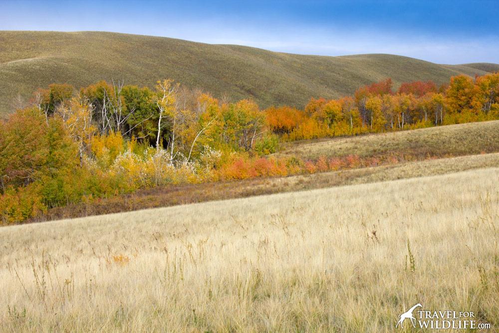 Burtinskaya Steppe Reserve, Orenburg, Russia