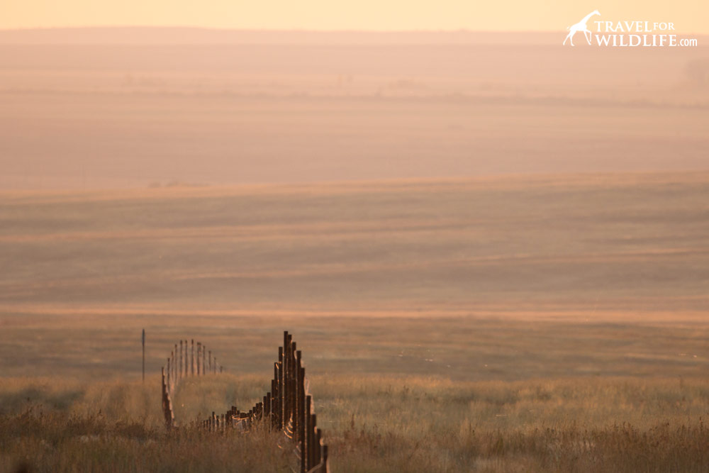 Perimeter fence around the Preduralskaya Steppe, Orenburg Reserve, Russia