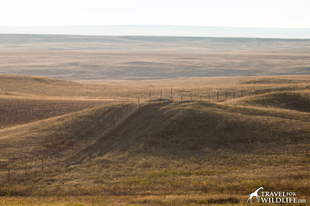The perimeter fence surrounding virgin steppe at Orenburg Reserve, Russia