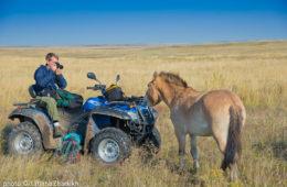 American photographer Hal Brindley and Lavender, youngest female Przewalski's horse at Preduralskaya Steppe (Pre-Ural Steppe) in the Orenburg Reserve, Russia