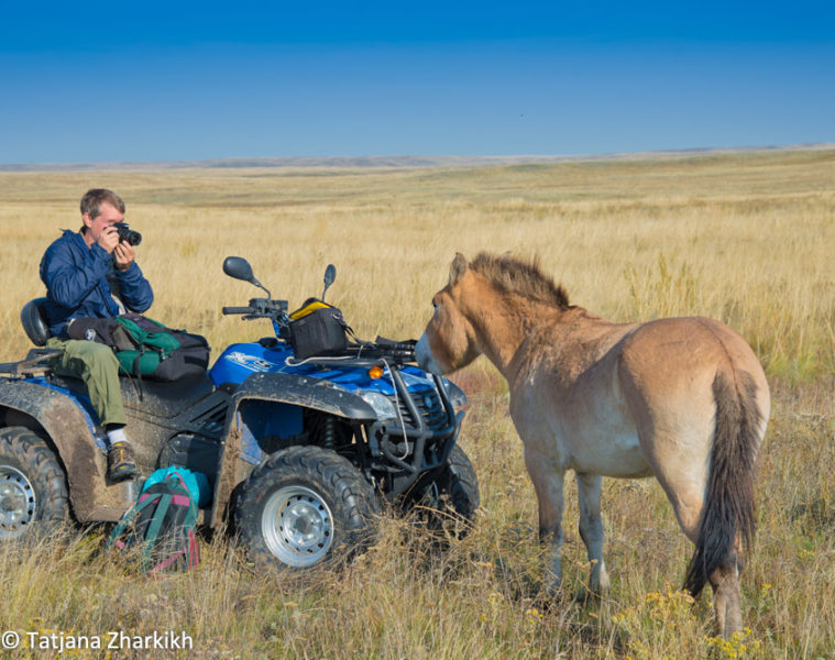American photographer Hal Brindley and Lavender, youngest female Przewalski's horse at Preduralskaya Steppe (Pre-Ural Steppe) in the Orenburg Reserve, Russia